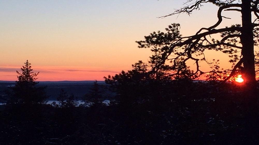 Happy-Fox-Nature-Awakens-sunset