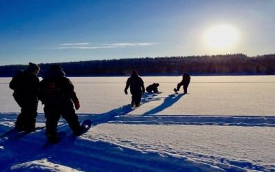 Talvinen metsä – Luontoretki lumikengillä, 2h