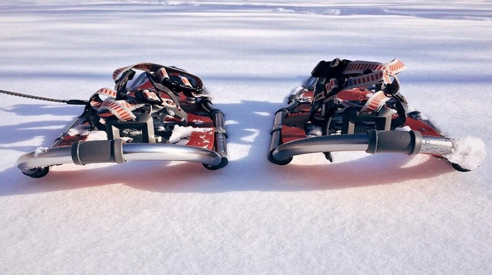 Happy-Fox-Winter-Fun-snowshoes