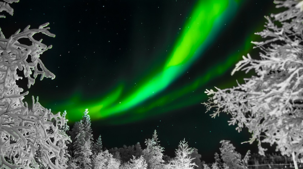 Happy-Fox-aurora-adventure-on-the-ounasjoki-river-auroa-snowy-trees
