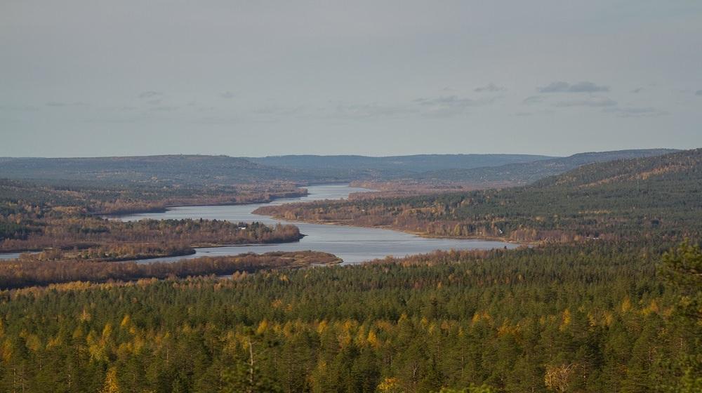 Happy-Fox-Fall-Colors-and-Landscapes-Ounasjoki-river-valley