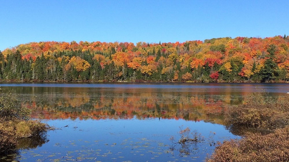 Happy-Fox-Fall-Colors-and-Landscapes-fall-colors-and-blue-river