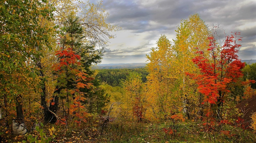 Happy-Fox-Fall-Colors-and-Landscapes-fall-colors-forest