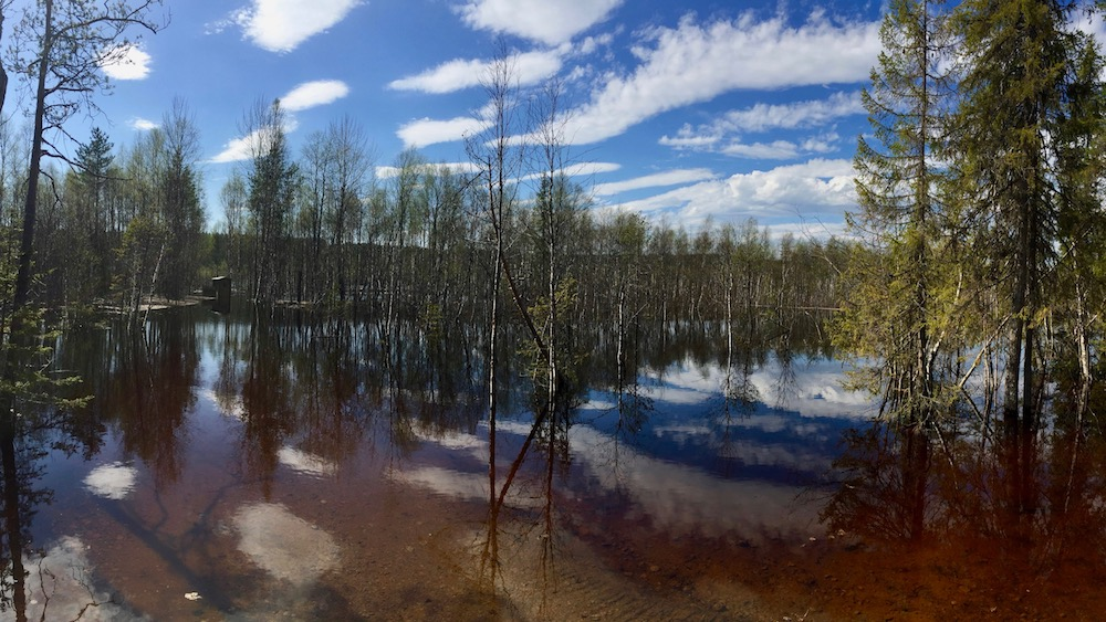 Happy-Fox-Arctic-Nature-Awakens-spring-flood-p