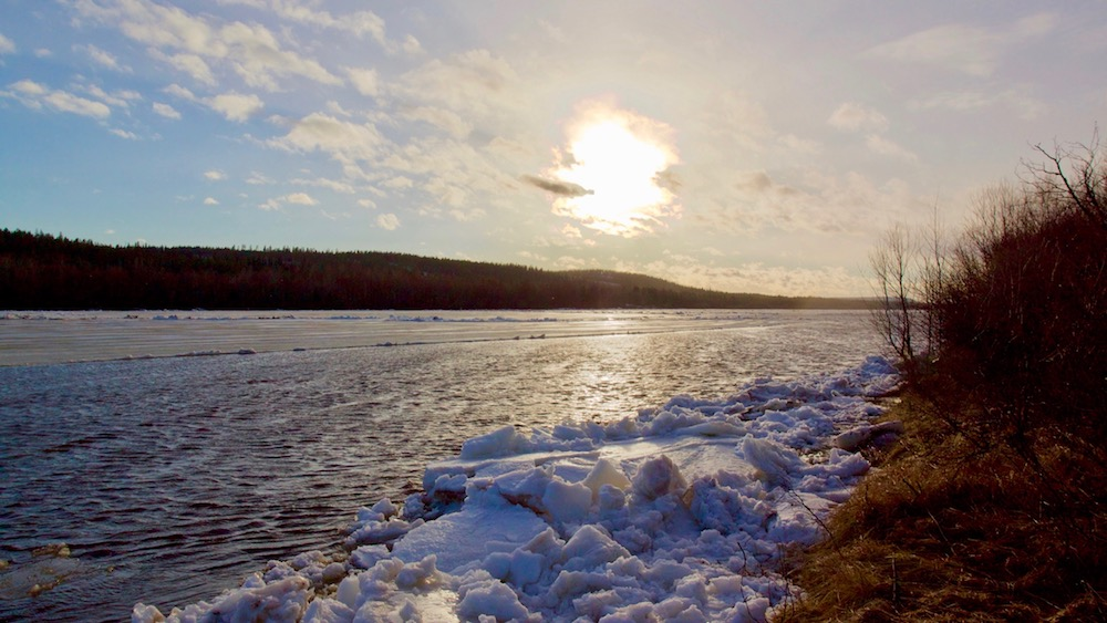 Happy-Fox-Arctic-Nature-Awakens-spring-ounasjoki-river-p