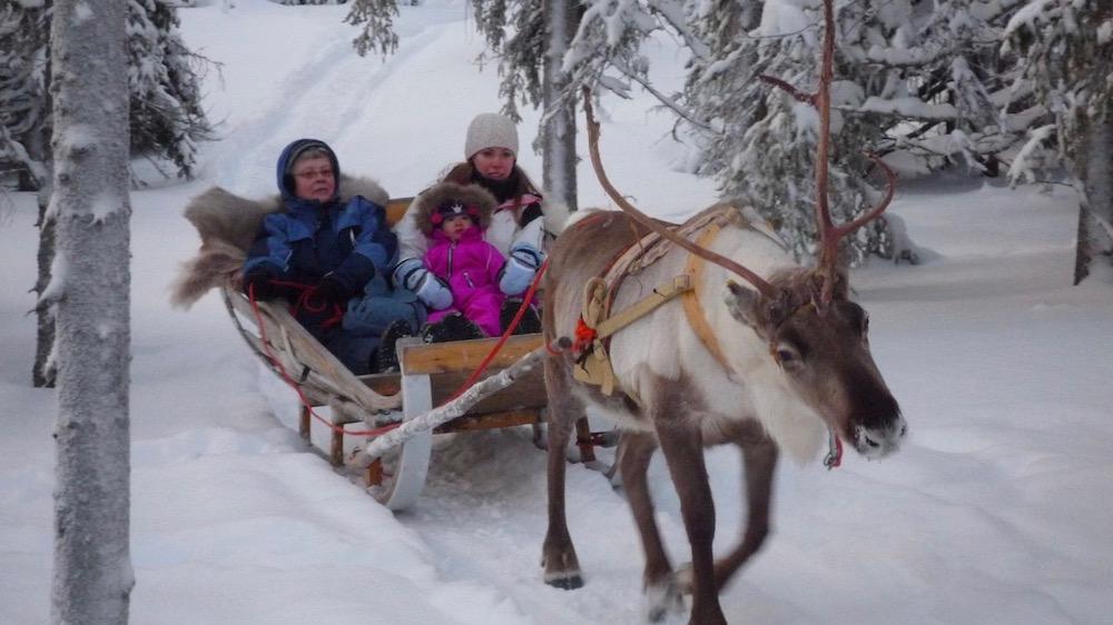 Happy-Fox-Arctic-Reindeer-Adventure-reindeer-sled-ride-p