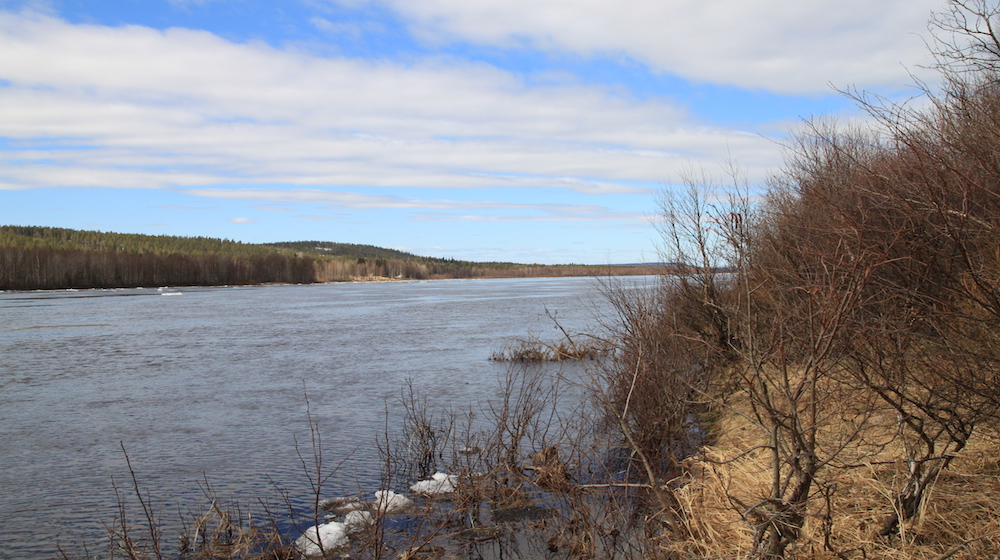 Happy-Fox-Nature-Awakens-Ounasjoki-river