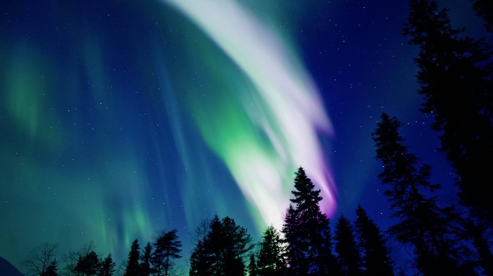 Happy-Fox-Aurora-Adventure-by-open-fire-auroras-forest