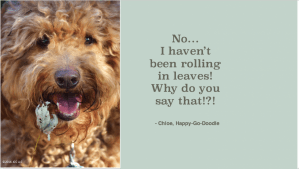 Red goldendoodle dog's face with leaf by smiling mouth and quote by J. Carl