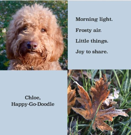 Quotes about fall by Jenise Carl with close-up of red goldendoodle dog and close-up of a fall leaf on ground and quote reads morning light, frosty air, little things, joy to share.
