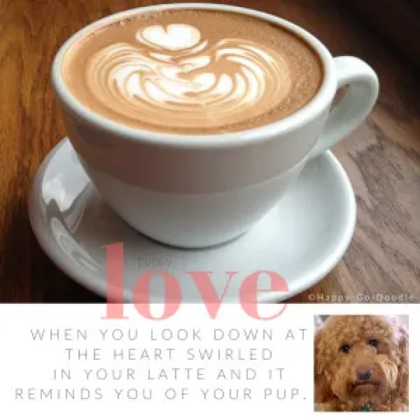 Latte with heart swirled in foam in white coffee cup sitting on dark wood with quote about dog love and a goldendoodle dog photo