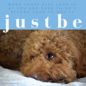 Close-up red goldendoodle dog looking up with quote about to-do list by j.carl