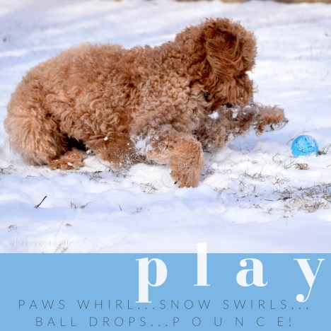 Red goldendoodle playing in snow with blue ball and quote about play written by j. carl