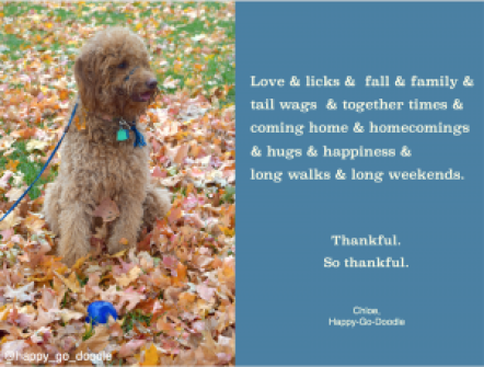 Red goldendoodle dog sitting in fall leaves with blue ball and original quote by j. carl about thanksgiving and blessings