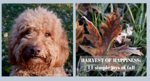Side by side photos of red goldendoodle dog's face and red fall leaf with happiness title