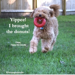 """Red goldendoodle dog running with red toy """"donut"""" in mouth quote by happy-go-doodle about donuts"""