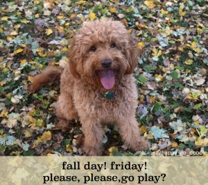 Red goldendoodle dog sitting in fall leaves with caption by Happy-Go-Doodle about Fridays and fall