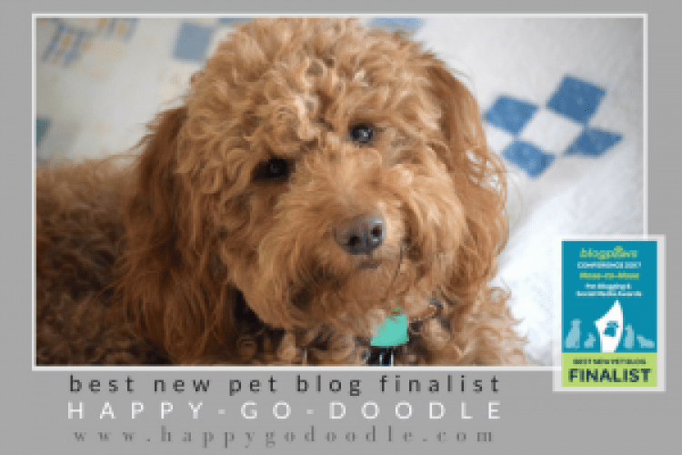 Happy-Go-Doodle, a smiley red goldendoodle, with BlogPaws 2017 Best New Pet Blog Finalist logo