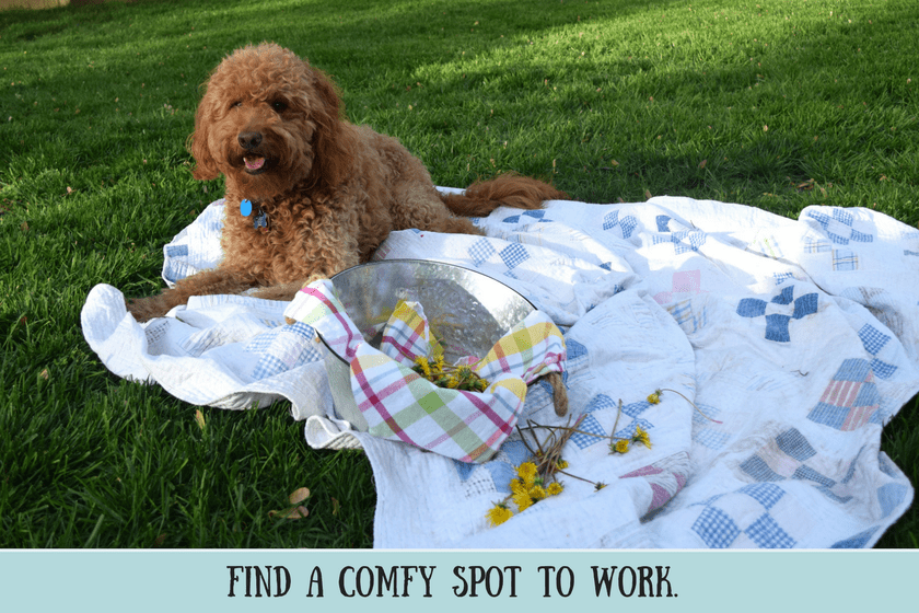 Red goldendoodle dog lying on vintage quilt in green grass with basket of dandelions and text that says find a comfy spot to work for creating a dandelion crown for dog