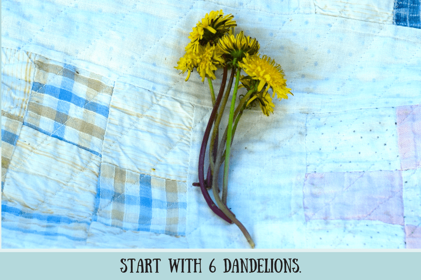 Six yellow dandelions with long stems on vintage quilt and title start with six dandelions