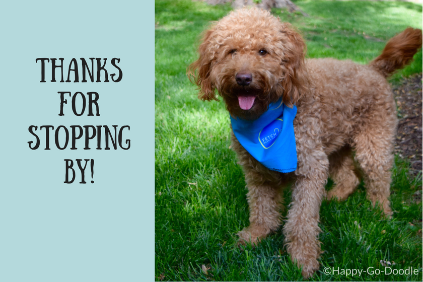 Red goldendoodle dog smiling and wearing a blue bandana with title thanks for stopping by