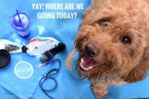"""This red goldendoodle is smiling and asking """"where are we going today?"""" And in small types, answers """"It doesn't really matter as long as we're going together."""" Dog is on blue background"""