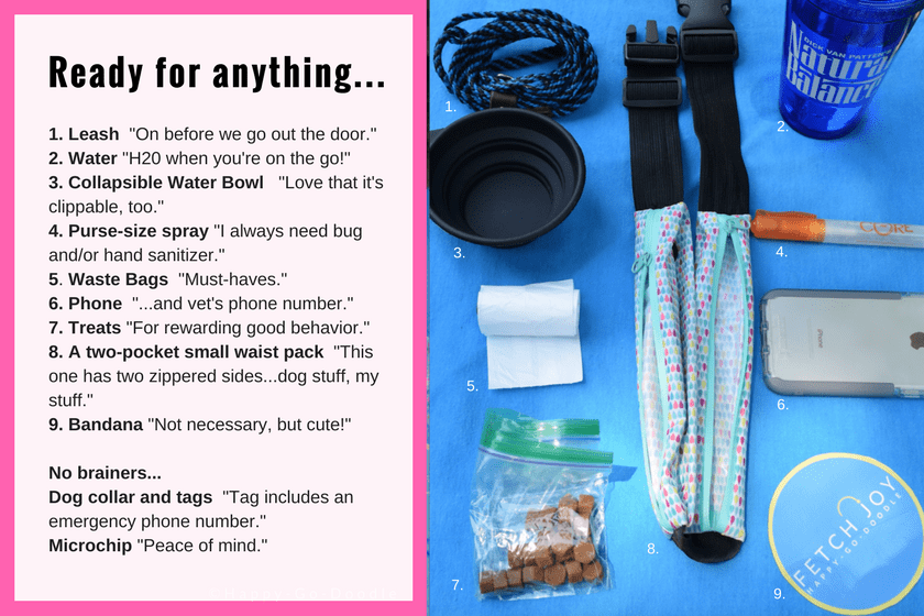 Essentials for short outings with your dog and text explaining each item.