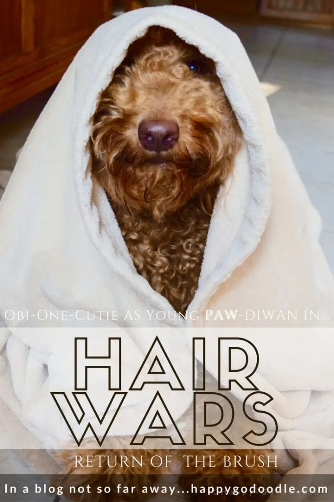 HAIR WARS a parody of Star Wars featuring Happy-Go-Doodle Chloe, a goldendoodle, as Obi-One-Cute, a young PAW-diwan wearing a cloak.