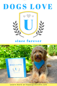 Love and fun and happiness are in store for you at Dogs Love U, a blog series with a college spin!