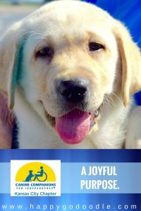 Close-up of labrador puppies face with tongue hanging out and title a joyful purpose and canine companions for independence kansas city chapter logo