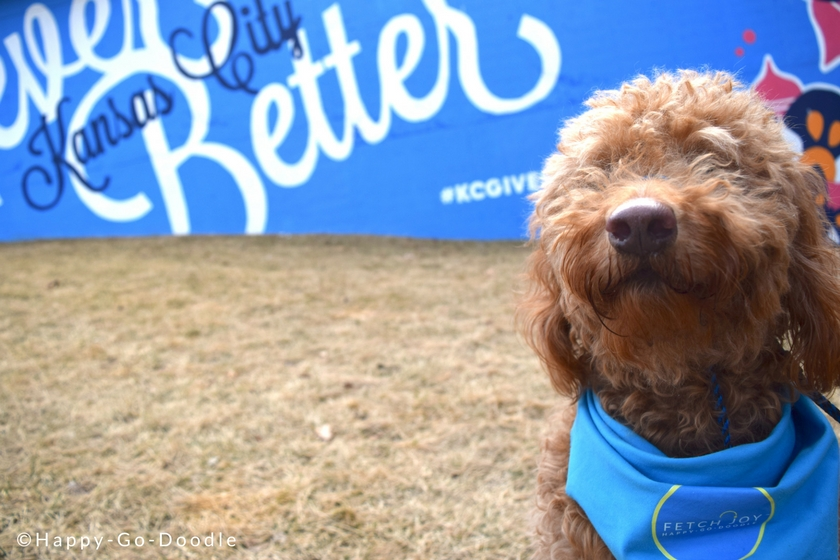 Goldendoodle dog in front of never better kansas city wall mural