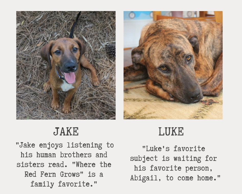 two very cute dogs named jake and luke both are brown
