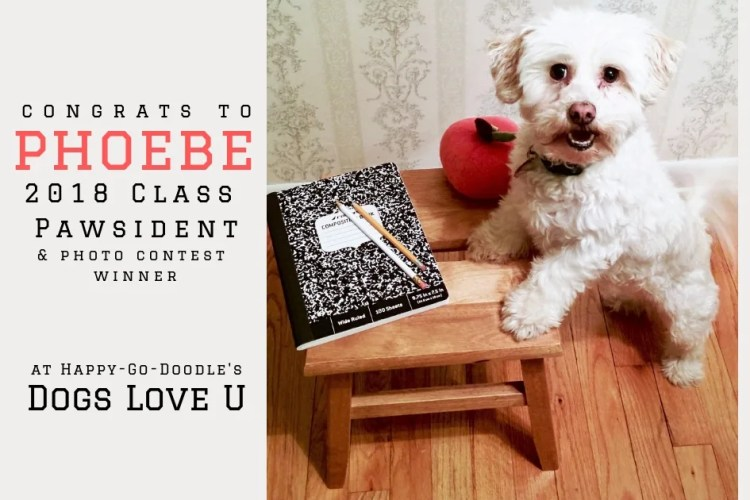 very cute dog at desk with apple and notebook and title congrats to phoebe winner of dogs love u photo contest