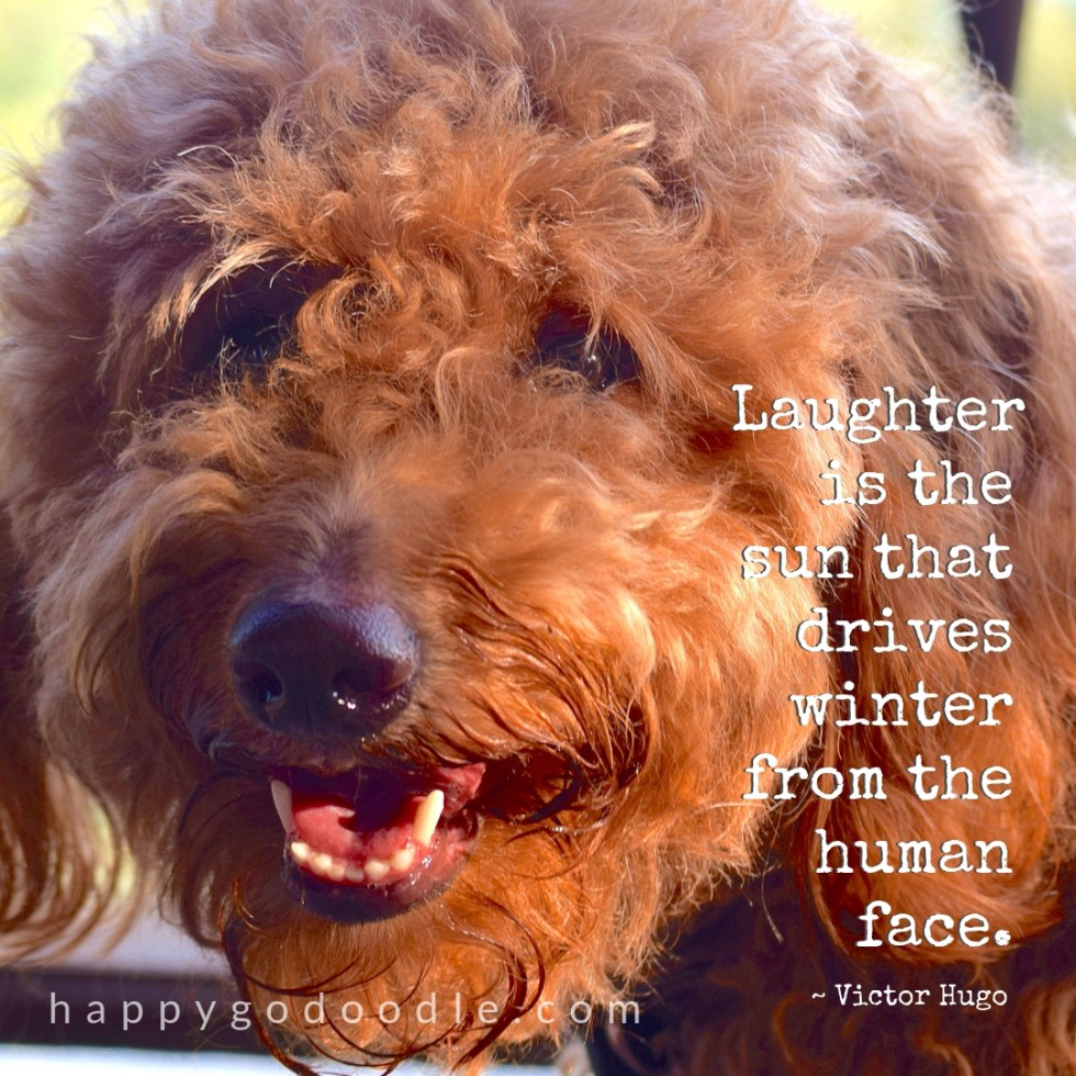 goldendoodle dog with smiling face and quote about winter by victor hugo