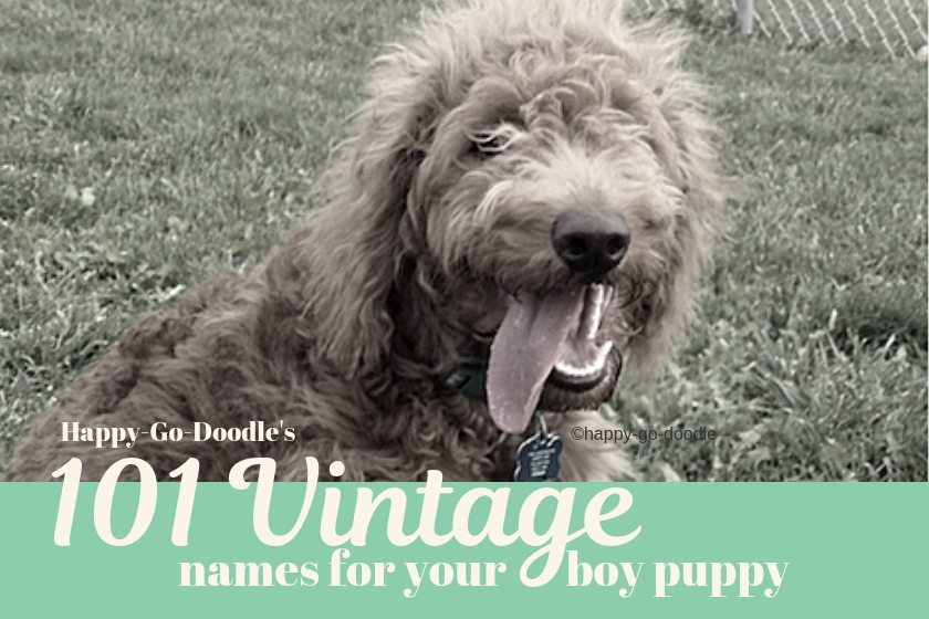 old hand tinted photo of dog with tongue out and title 101 vintage names for your boy puppy