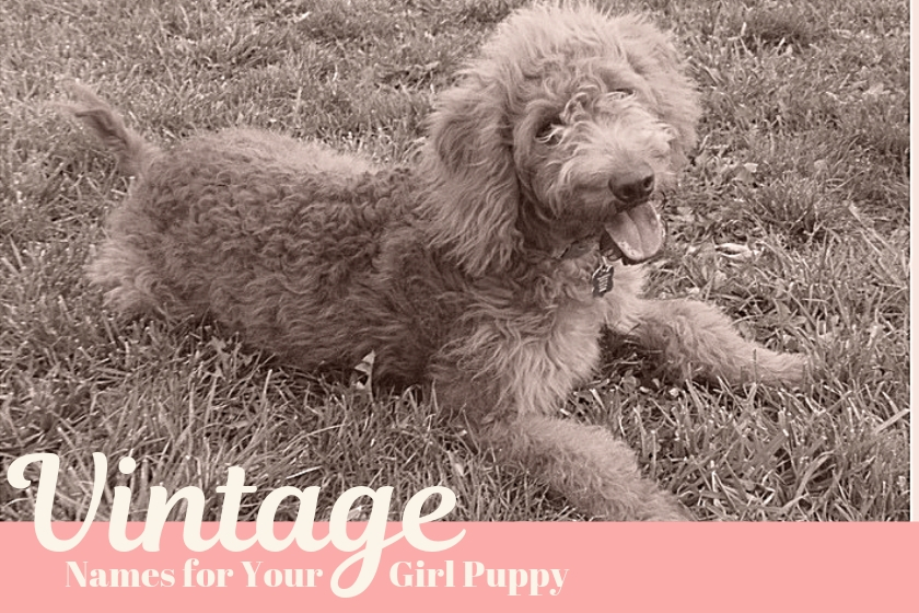old fashioned photo of puppy with title old fashioned dog names for your girl puppy