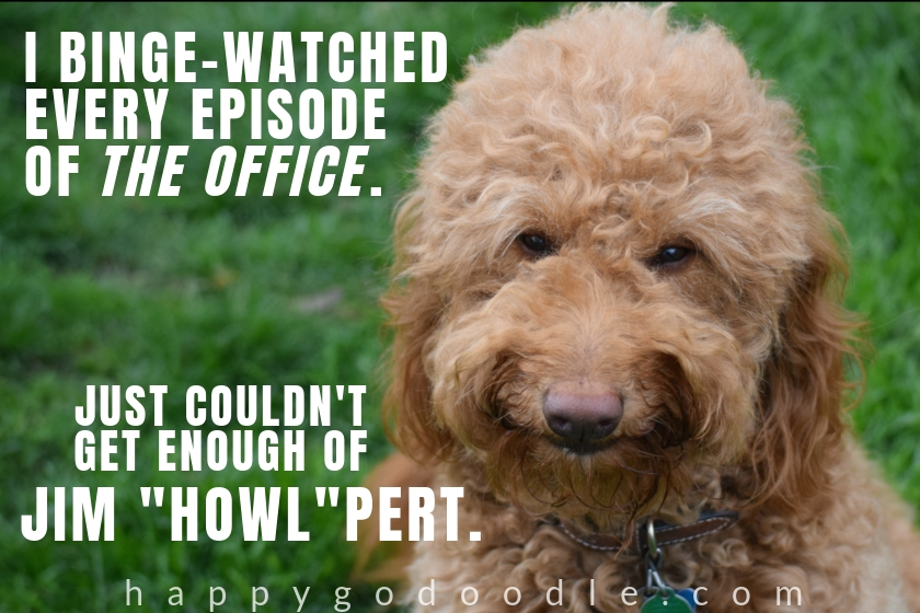 cute dog meme and Goldendoodle dog's funny face