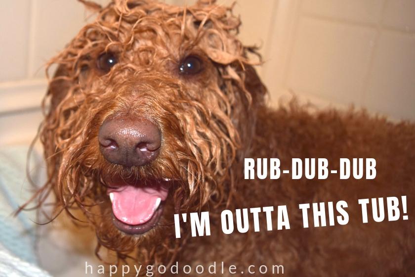 cute dog meme and dog in bathtub