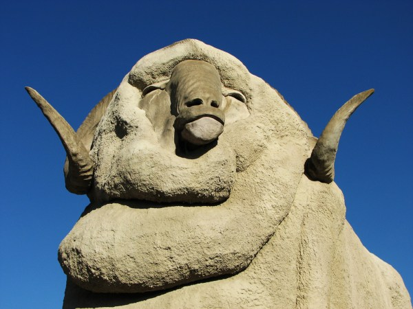 Things To Do Between Sydney and Melbourne | The Big Merino