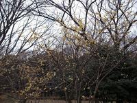 s-RIMG4888.jpg