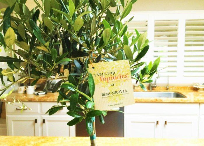 monrovia plants tag
