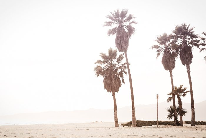Beach Palms summer whites