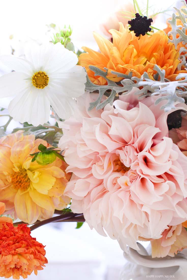 close up of dahlia flowers and coscmos