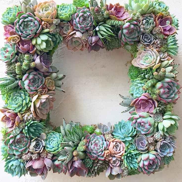 great succulent decor wreath