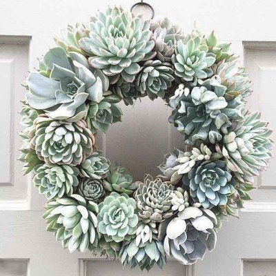 A Great Shop for Succulent Decor