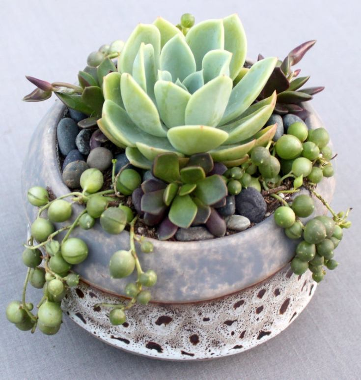 Gorgeous cactus shop