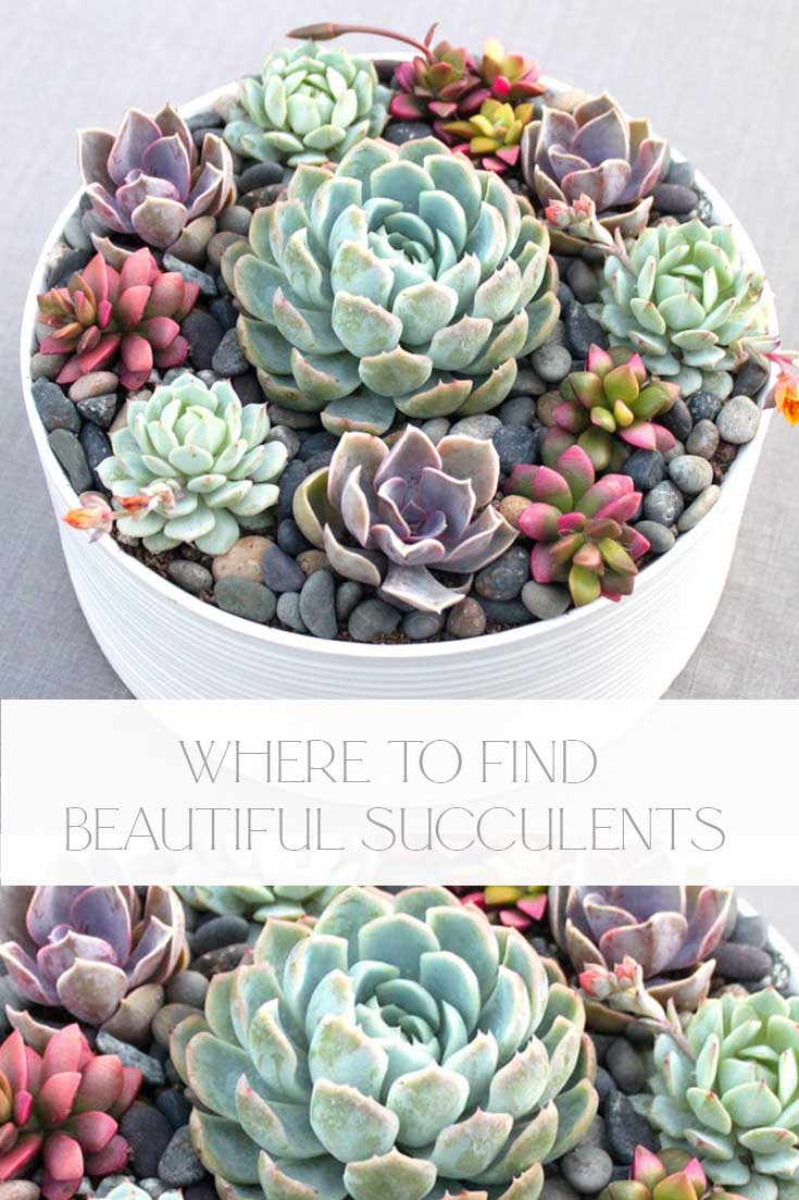 where to buy succulents online pin