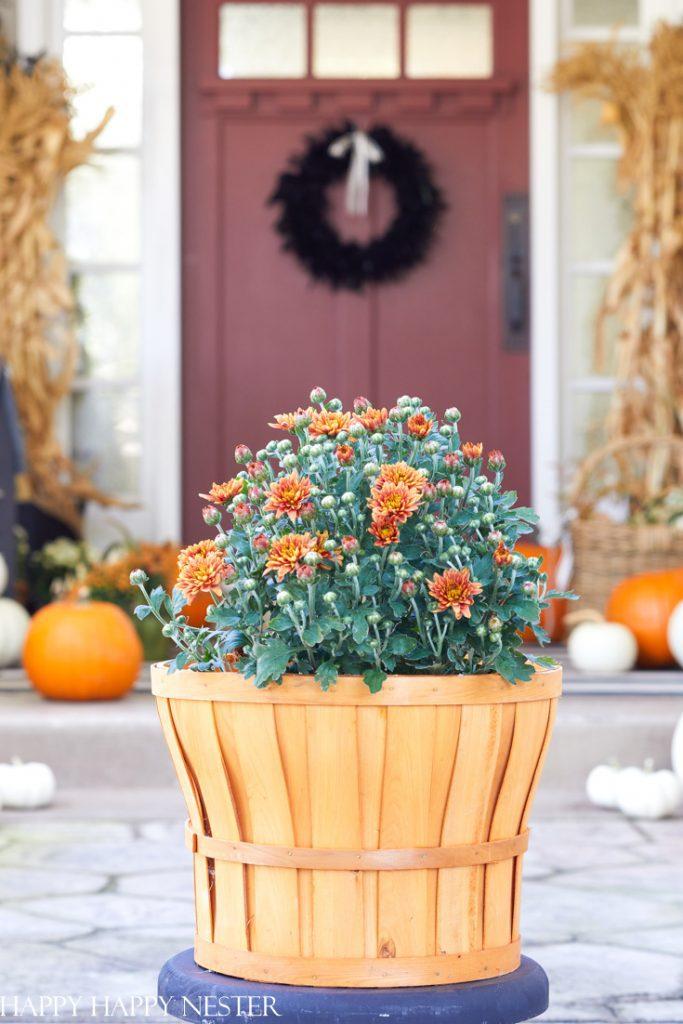 fall mum display ideas
