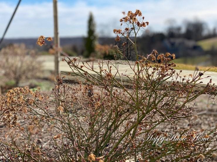 Pruning roses-3