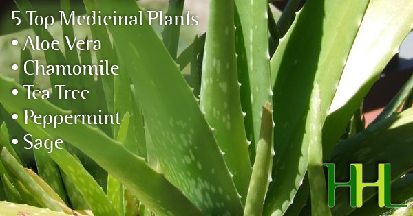 5 home grown medicinal plants